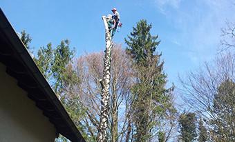 Super Baumfällung München: Baumfällarbeiten zu transparenten Kosten ZQ57